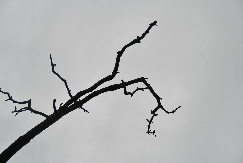 Knotiga grenar