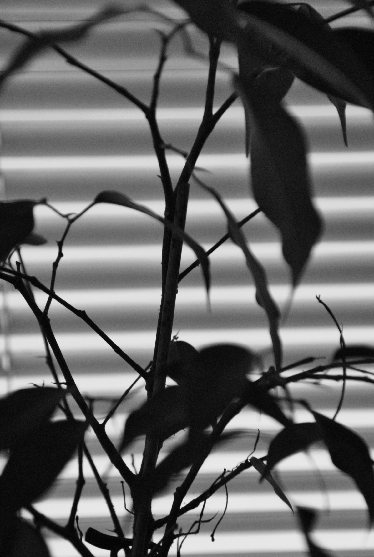 Svartvit blomma mot persienn
