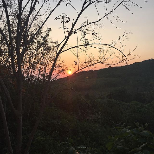 Jungle sunset!